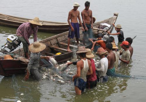Fishermen harvest fish from a farming pond near Mandalay.
